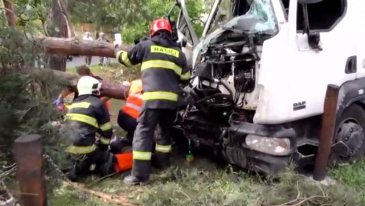 Súlyos baleset: fának hajtott egy kamion – mindenről egy darázs tehet
