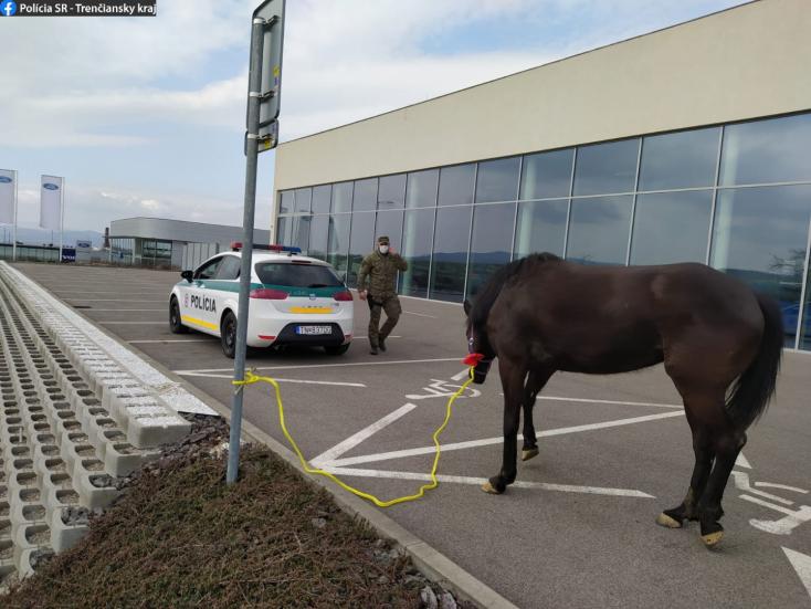 Egylóerős musztángot kergettek a rendőrök!
