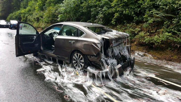 UNDORÍTÓ: Nyálkatenger árasztotta el az autókat a baleset után